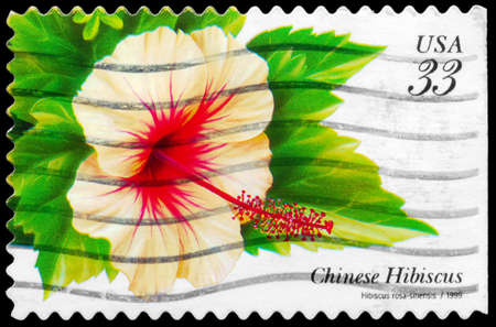 china rose: USA - CIRCA 1999: A Stamp printed in USA shows the Chinese Hibiscus (Hibiscus rosa-sinensis), Tropical Flowers series, circa 1999