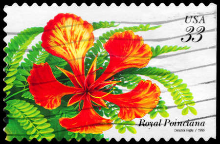 phytology: USA - CIRCA 1999: A Stamp printed in USA shows the Royal Poinciana (Delonix regia), Tropical Flowers series, circa 1999 Stock Photo