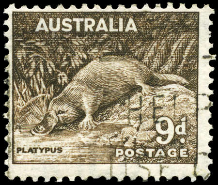 platypus: AUSTRALIA - CIRCA 1943: A Stamp printed in AUSTRALIA shows the Platypus, circa 1943