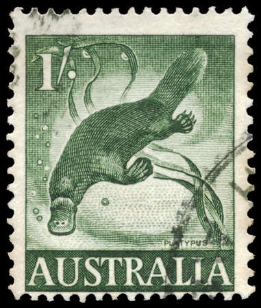 AUSTRALIA - CIRCA 1960: A Stamp printed in AUSTRALIA shows the Platypus, circa 1960