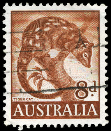 AUSTRALIA - CIRCA 1960: A Stamp printed in AUSTRALIA shows the Tiger Cat, circa 1960 Stock Photo - 16375873
