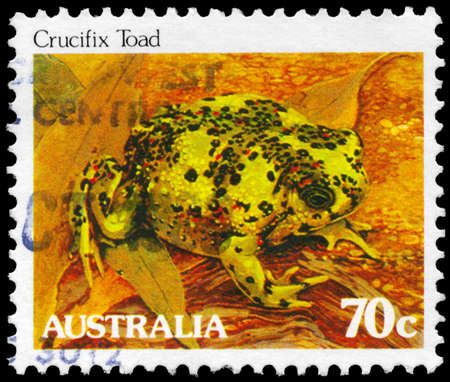 AUSTRALIA - CIRCA 1981: A Stamp printed in AUSTRALIA shows the Crucifix Toad, series, circa 1981 Stock Photo - 16376023
