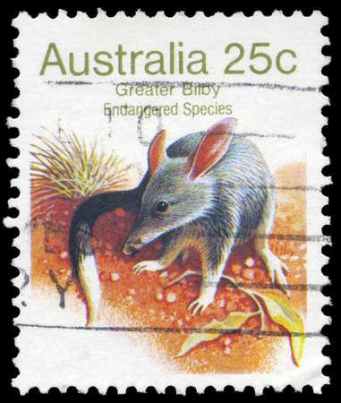 dedo me�ique: AUSTRALIA - CIRCA 1981: Un sello impreso en AUSTRALIA muestra el Bilby Mayor, series de Especies en Peligro, alrededor de 1981