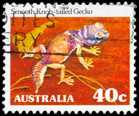 AUSTRALIA - CIRCA 1981: A Stamp printed in AUSTRALIA shows the Smooth Knob Tail Gecko, series, circa 1981 Stock Photo - 16376055