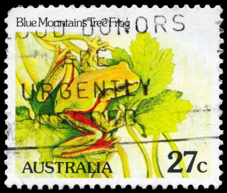 blue mountains tree frog: AUSTRALIA - CIRCA 1981: A Stamp printed in AUSTRALIA shows the Blue Mountains Tree Frog, series, circa 1981 Editorial