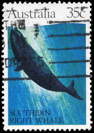 subsea: AUSTRALIA - CIRCA 1982: A Stamp printed in AUSTRALIA shows the Southern Right Whale, series, circa 1982