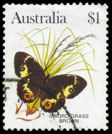 AUSTRALIA - CIRCA 1983: A Stamp printed in AUSTRALIA shows the Swordgrass Brown (Tisiphone abeona), series, circa 1983