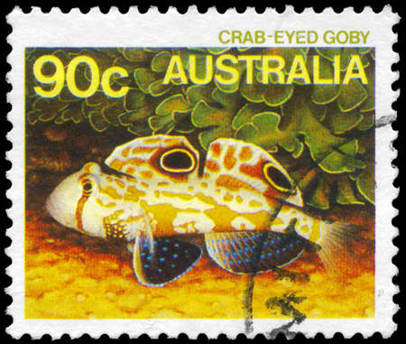 fish exhibition: AUSTRALIA - CIRCA 1984: A Stamp printed in AUSTRALIA shows the Crab-eyed Goby, series, circa 1984