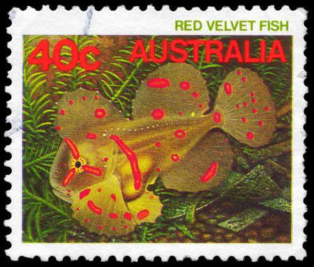 subaquatic: AUSTRALIA - CIRCA 1984: A Stamp printed in AUSTRALIA shows the Red Velvet Fish, series, circa 1984