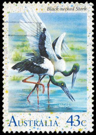 AUSTRALIA - CIRCA 1991: A Stamp printed in AUSTRALIA shows the Black-necked Stork, Water Birds series, circa 1991 Stock Photo - 16376010
