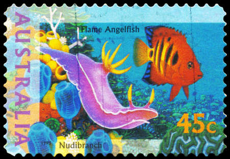subaquatic: AUSTRALIA - CIRCA 1995: A Stamp printed in AUSTRALIA shows the Flame Angelfish and Nudibranch, The World Down Under series, circa 1995