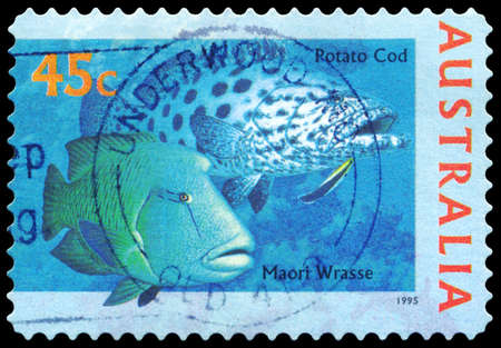 cheilinus undulatus: AUSTRALIA - CIRCA 1995: A Stamp printed in AUSTRALIA shows the Maori Wrasse, The World Down Under series, circa 1995 Editorial
