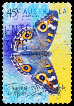 hexapod: AUSTRALIA - CIRCA 1998: A Stamp printed in AUSTRALIA shows the Meadow Argus (Junonia villida), Butterflies series, circa 1998