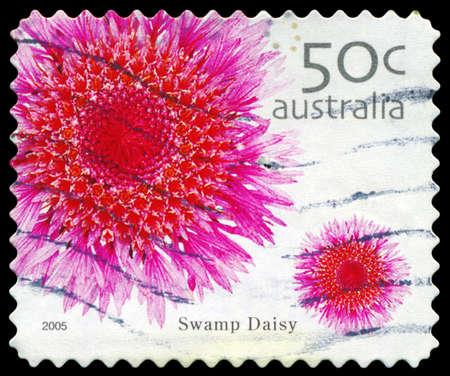 AUSTRALIEN - CIRCA 2005: Ein Stempel in Australien gedruckt zeigt die Swamp Daisy, Wild Flowers-Serie, circa 2005