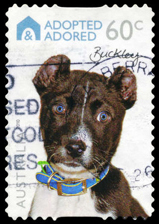 adopted: AUSTRALIA - CIRCA 2010: A Stamp printed in AUSTRALIA shows the Dog Buckley, Adopted and Adored series, circa 2010