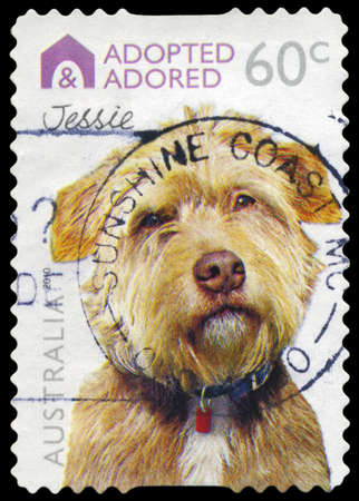 adopted: AUSTRALIA - CIRCA 2010: A Stamp printed in AUSTRALIA shows the Dog Jessie, Adopted and Adored series, circa 2010