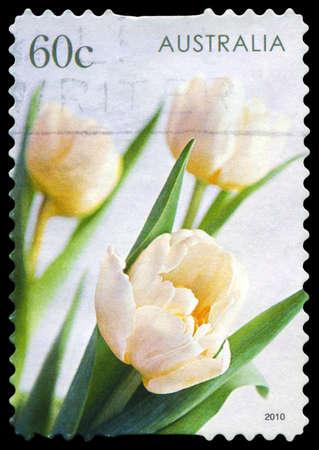 AUSTRALIA - CIRCA 2010: A Stamp printed in AUSTRALIA shows the Tulips, series, circa 2010