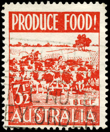 AUSTRALIA - CIRCA 1953: A Stamp printed in AUSTRALIA shows the Cattle, issued to encourage food production, circa 1953 Stock Photo - 16652204