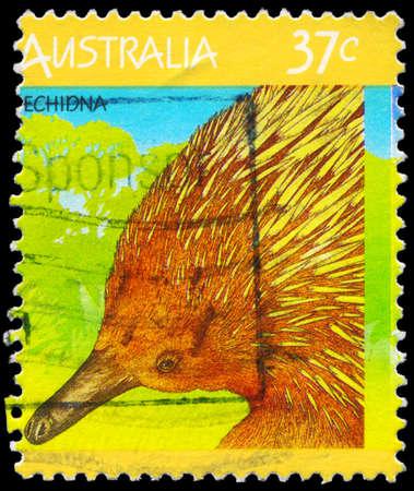 echidna: AUSTRALIA - CIRCA 1987: A Stamp printed in AUSTRALIA shows the Echidna, Fauna series, circa 1987 Editorial