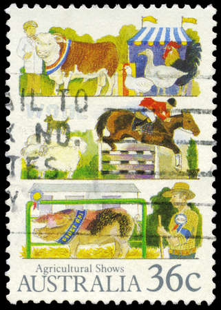 granger: AUSTRALIA - CIRCA 1987: A Stamp printed in AUSTRALIA shows the Livestock, Agricultural Shows series, circa 1987 Editorial