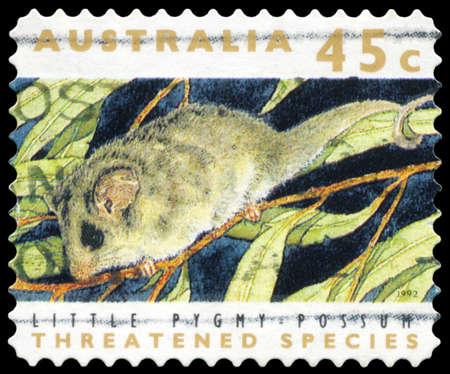 possum: AUSTRALIA - CIRCA 1992: A Stamp printed in AUSTRALIA shows the Little Pygmy Possum, Threatened Species series, circa 1992 Editorial