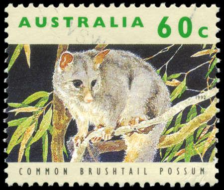 possum: AUSTRALIA - CIRCA 1992: A Stamp printed in AUSTRALIA shows the Common Brushtail Possum, series, circa 1992