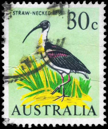 AUSTRALIA - CIRCA 1966: A Stamp printed in AUSTRALIA shows the Straw-necked Ibis, Birds series, circa 1966 Stock Photo - 18723851