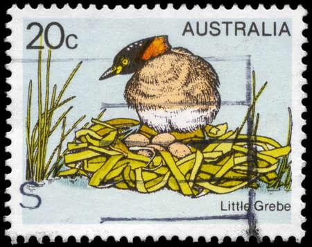 AUSTRALIA - CIRCA 1978: A Stamp printed in AUSTRALIA shows the Little Grebe, Birds series, circa 1978 Stock Photo - 18723843