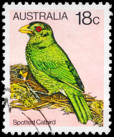 catbird: AUSTRALIA - CIRCA 1980: A Stamp printed in AUSTRALIA shows the Spotted Catbird, Birds series, circa 1980