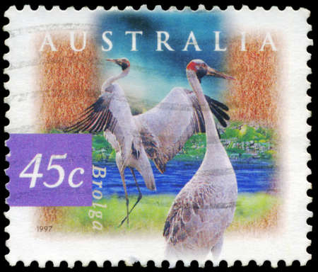 AUSTRALIA - CIRCA 1997: A Stamp printed in AUSTRALIA shows the Brolga, Fauna and Flora, series, circa 1997 Stock Photo - 18723855