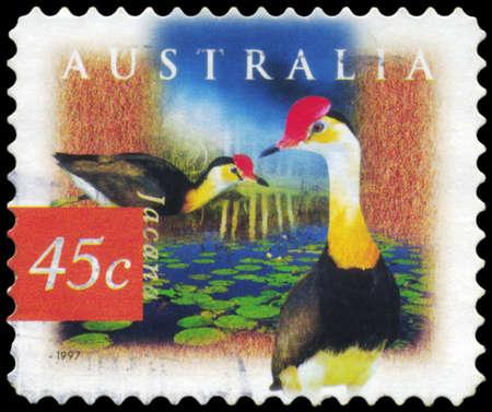AUSTRALIA - CIRCA 1997: A Stamp printed in AUSTRALIA shows the Comb Crested Jacana, Fauna and Flora, series, circa 1997 Stock Photo - 18723841