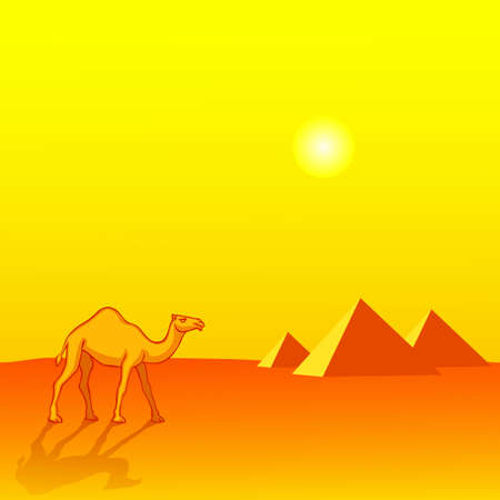 Landscape with Camel and Egyptian pyramids Vector