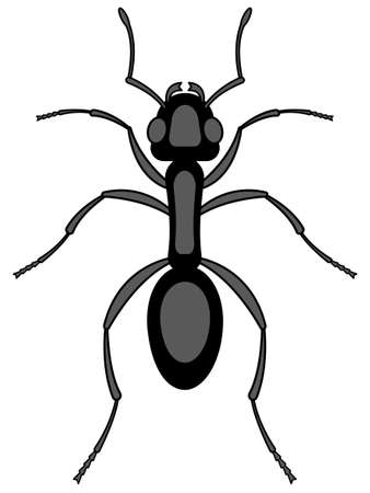 hexapod: Illustration of the ant insect icon