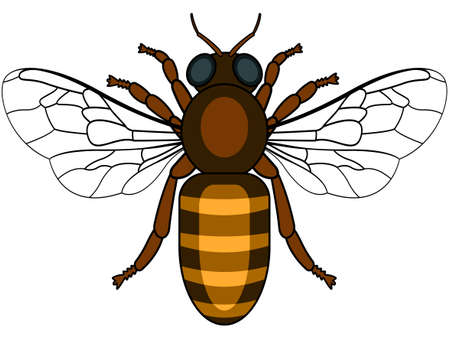Illustration of the bee insect icon