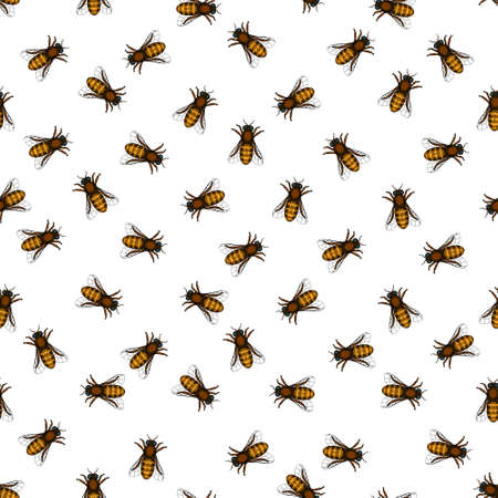 apiculture: Seamless pattern of the honeybee insects