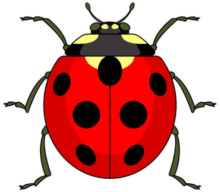 Illustration of the ladybug icon 일러스트