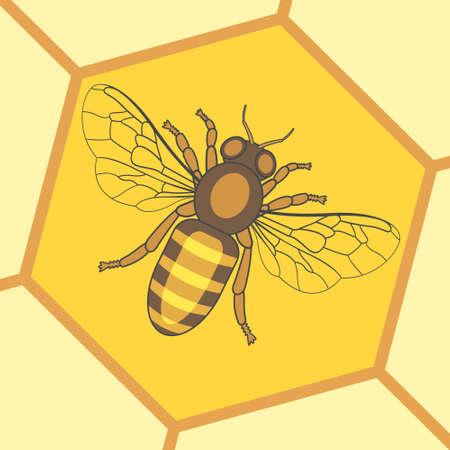 Illustration of the honey bee insect icon