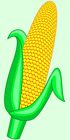 corncob: Illustration of the corncob icon