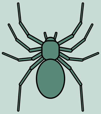 spidery: Illustration of the spider icon