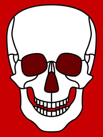 calavera caricatura: Ilustraci�n del icono del cr�neo de la historieta Vectores