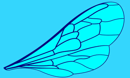 Illustration of the insects wing