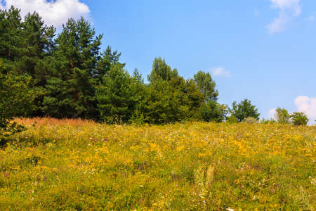 glade: Summer landscape with wild flowers on glade Stock Photo