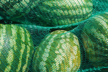 Background of the watermelons in netting