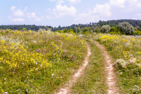 Rural landscape with a dirt road and meadow