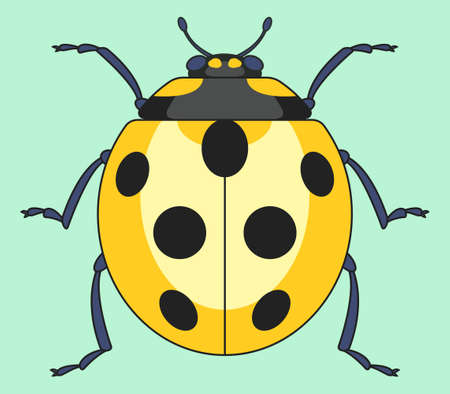 Illustration of the yellow ladybug insect