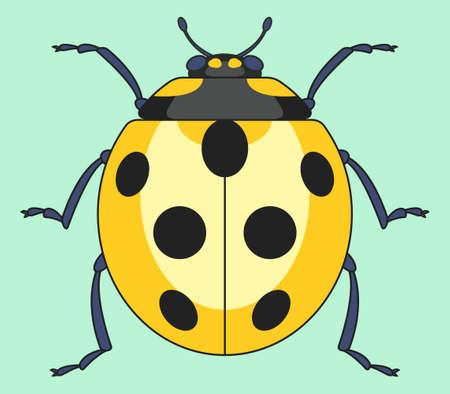 Illustration of the yellow ladybug insect