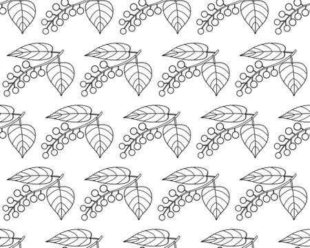 bacca: Seamless pattern of the contour bird cherry fruits and leaves