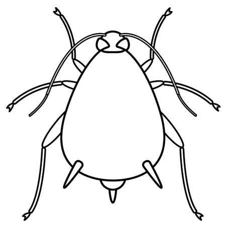 entomology: Illustration of the contour aphid insect icon