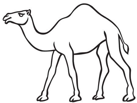 Illustration of the contour camel icon