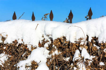 Snow-covered twined hop fence background